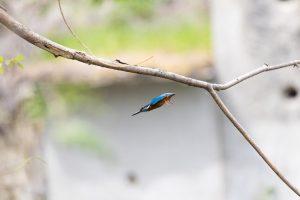 animal, background, beak