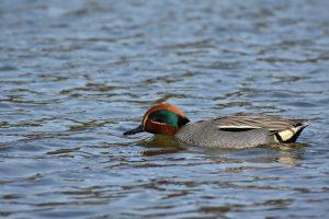 animal, lake, waterside