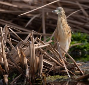 bird, nature, birdwatching