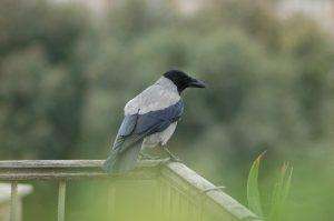 bird, wildlife, nature