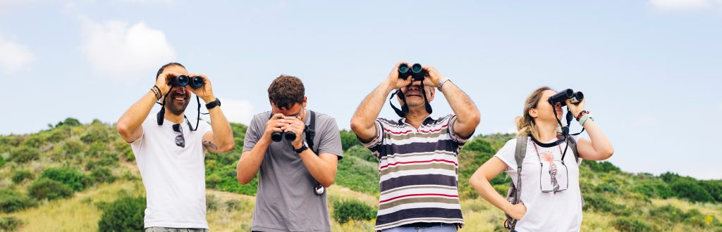 Celebrating autumn migration with a bird race at Akrotiri peninsula