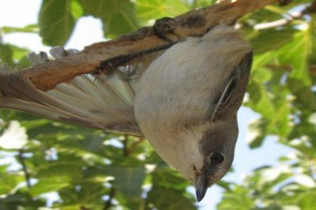 Bird-on-limestick_450_850_crp