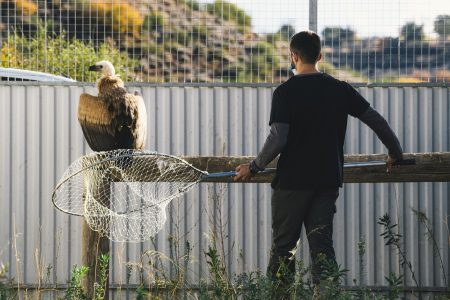 Kostis in the aviary with vet Constantinos Antoniou on the day of release © Silvio A. Rusmigo