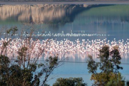 Flamingoes-Christos-Mousikos_450_850_crp