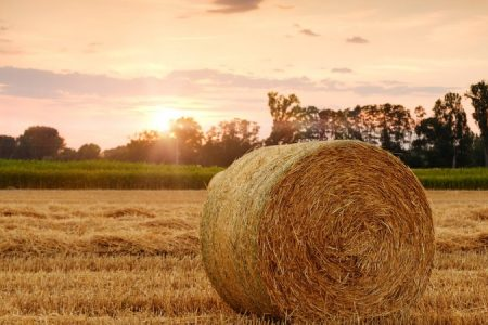 agriculture-img_450_850_crp