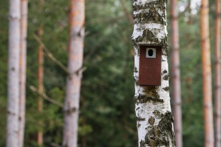 Bird booth hung on a tree. Spring home for nesting birds