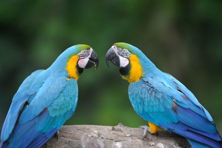 Wild parrot bird,