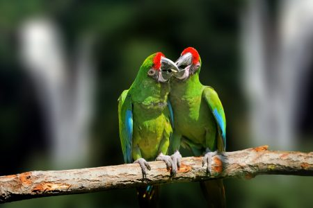 Wild parrot bird